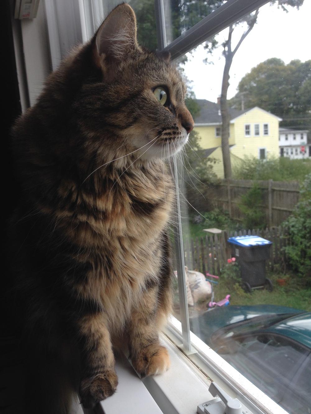 Maddie surveys the neighborhood.