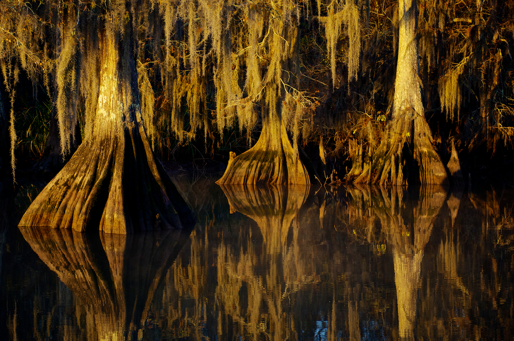 Lake Deautrive Cypress Trees