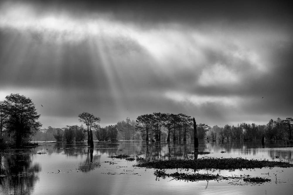 The Atchafalaya Basin in Black & White