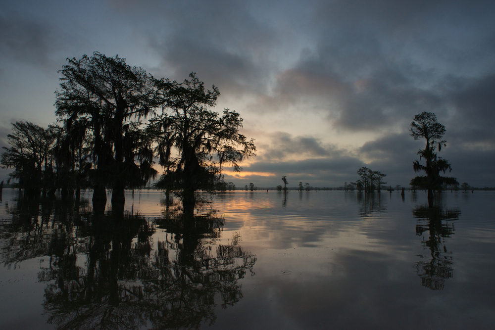 Sunrise Atchafalaya Basin