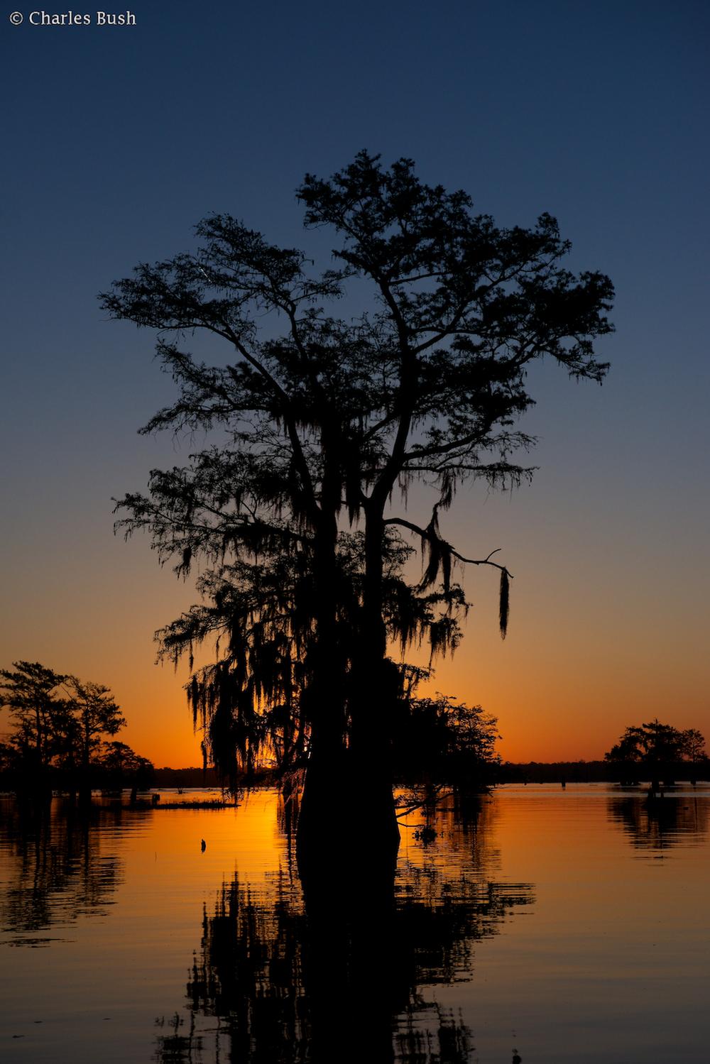 Sunrise Henderson Swamp