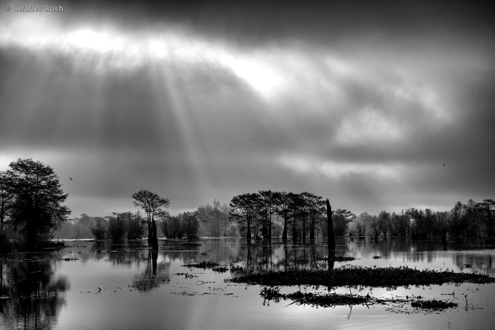 Atchafalaya Black and White