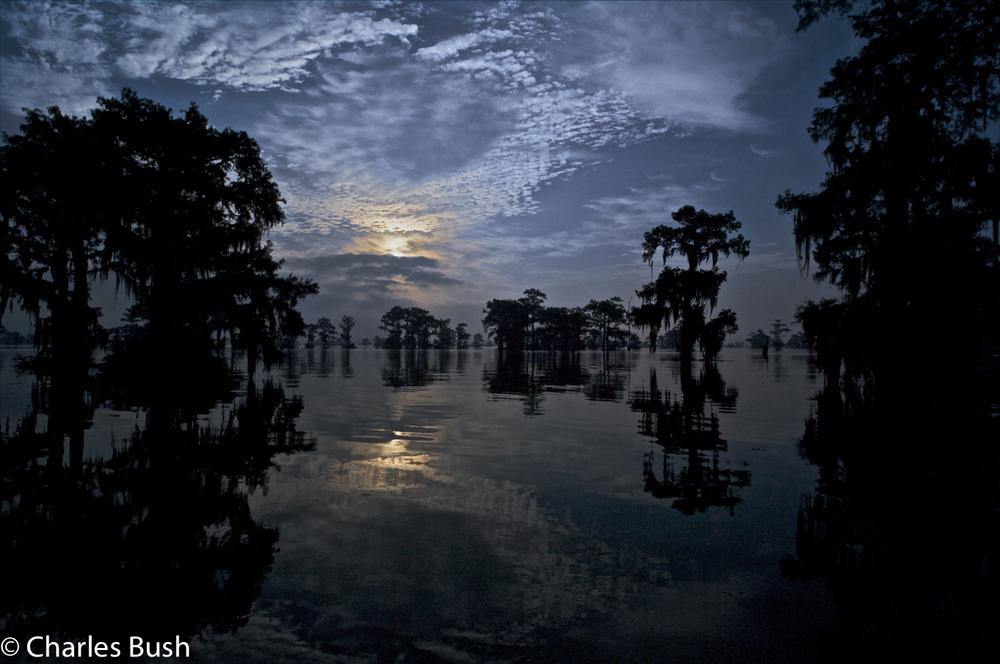 Henderson Swamp Scene