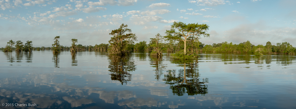 Original Panoramic Image Taken in the Atchafalaya Basin