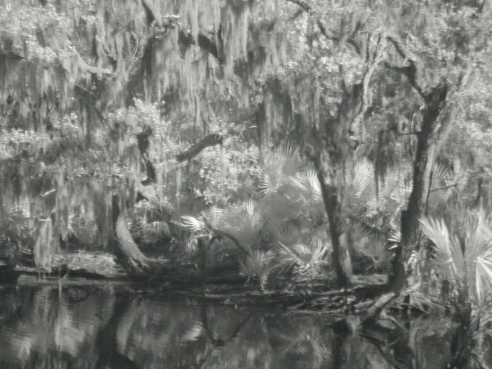 Bayou Scene Taken with Coolpix 950