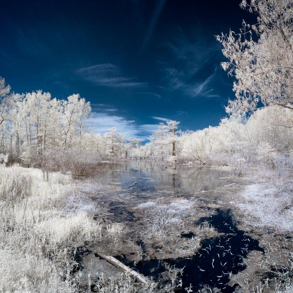 Lake Martin Swamp Scene