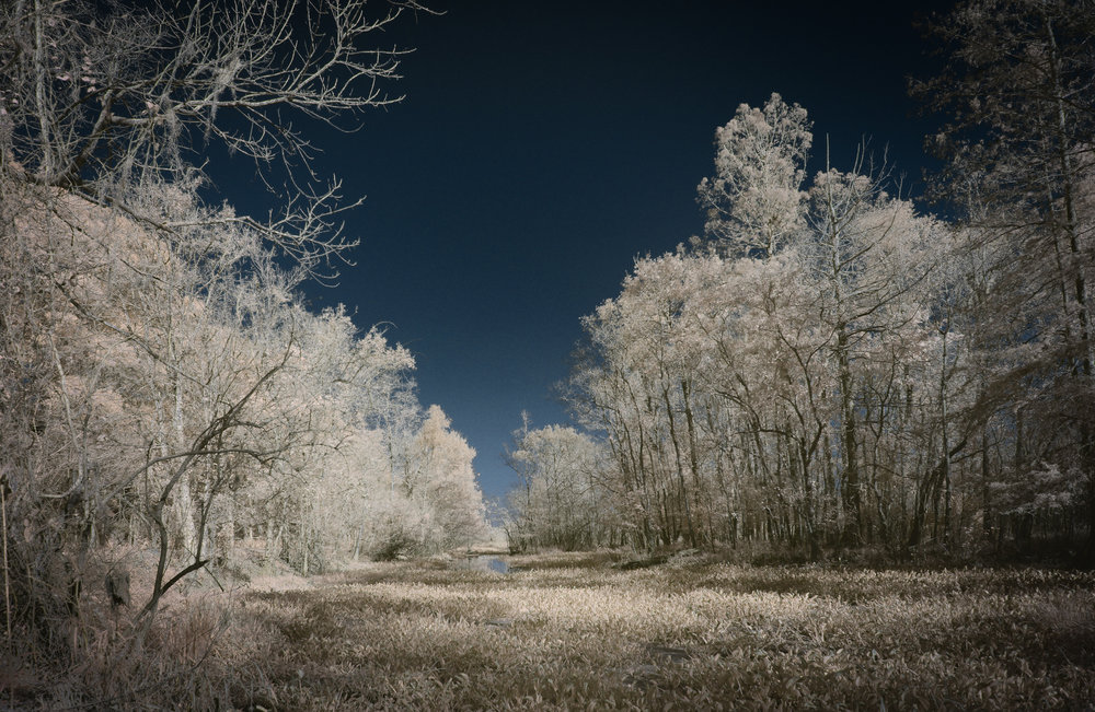 Infrared Cove at Lake Martin