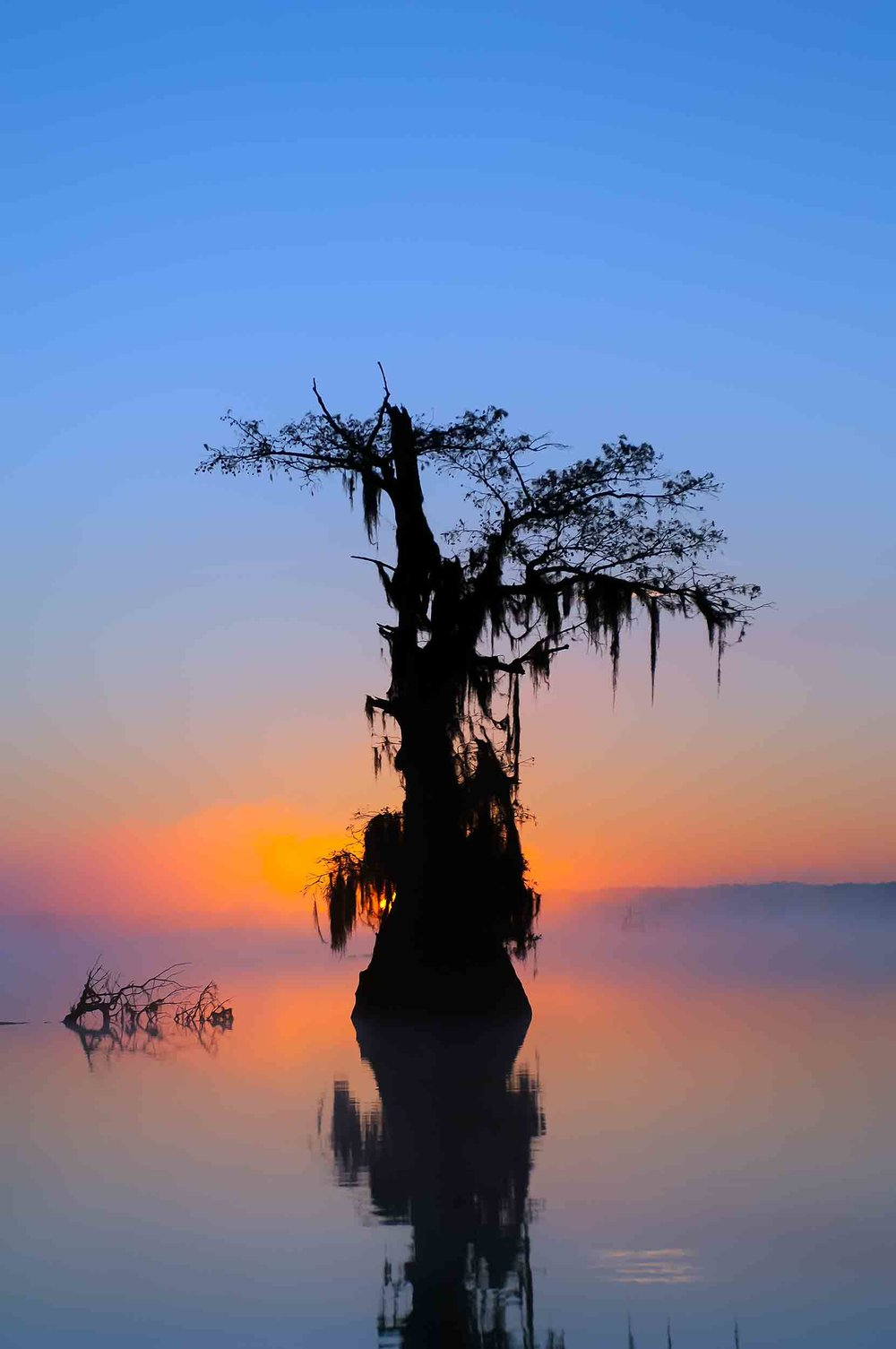 Cypress Tree at Sunrise - Lake Deautrive
