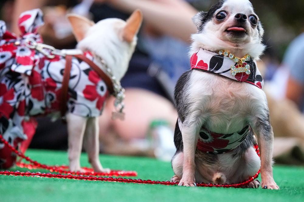 Dogs-3.jpg