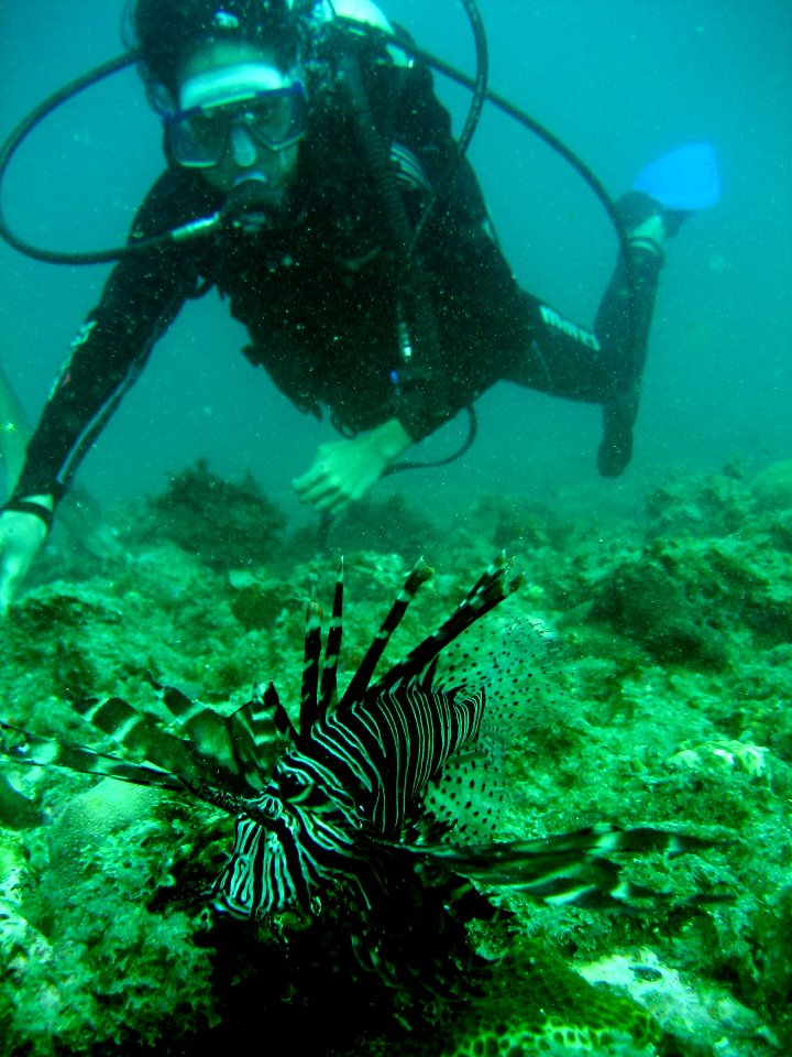 Diving With Lionfish and Orcas- Pigeon Island.jpg