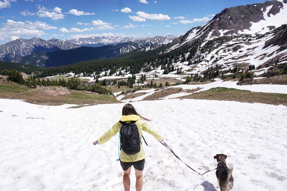 Snowy Dog - Emily Olsen.JPG