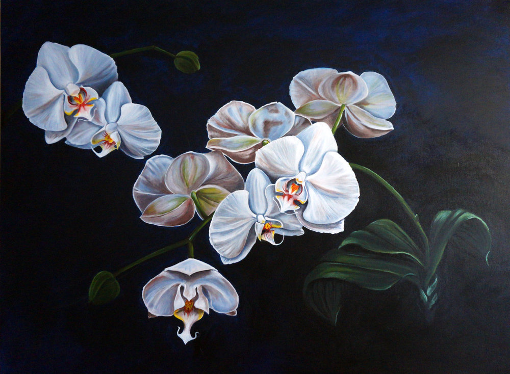 Orchids-SOLD