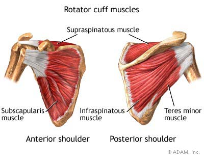 The 4 muscles that make up the rotator cuff: S.I.T.S. (Subscapularis, Infraspinatus, Teres Minor, and Supraspinatus)