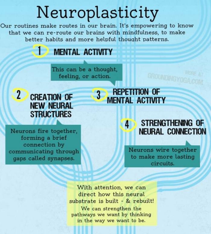 muriel-dalmulder-neuroplasticity.jpg