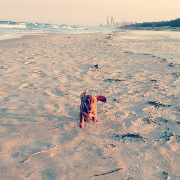 Baywatch Stella.  (Taken with  Instagram )