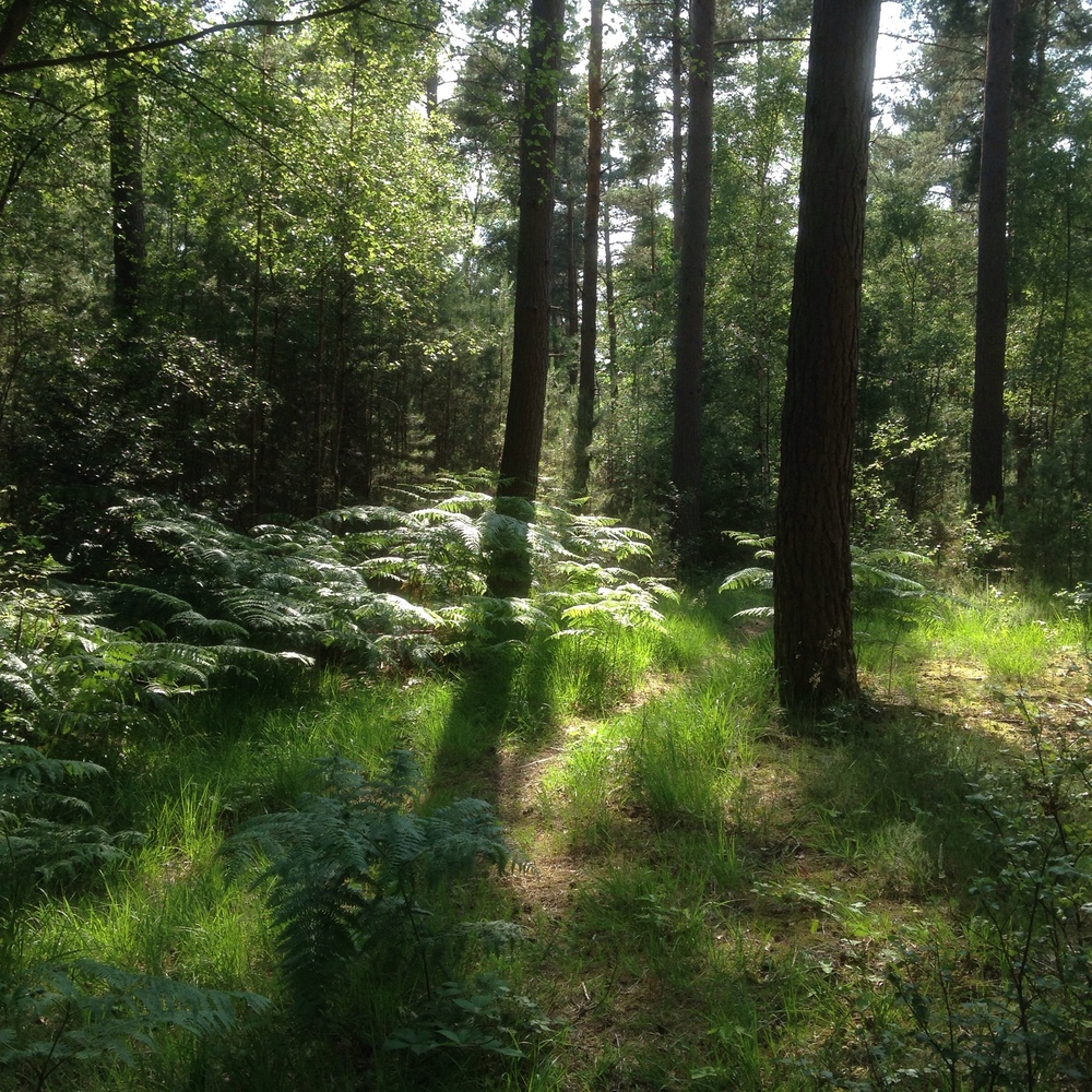 Day 73 - Woods in scorchingly hot weather