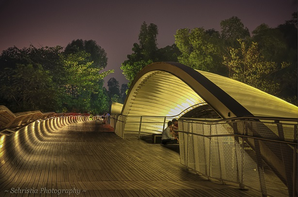 photo : Henderson Waves Bridge