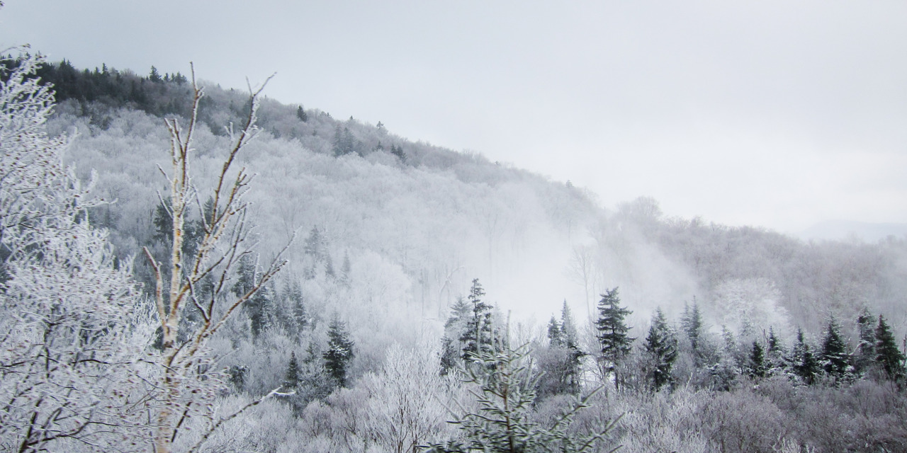 Frosted forest at Cannon Mountain, NH