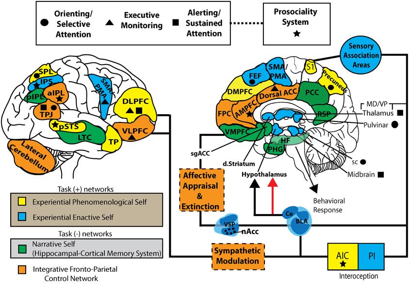 SART_mindfulness_2012_09_09