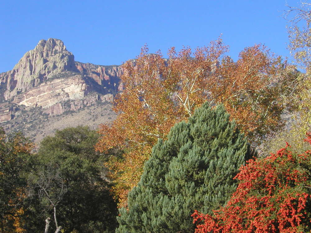 Fall Chircahua Mountains, Cave Creek Canyon