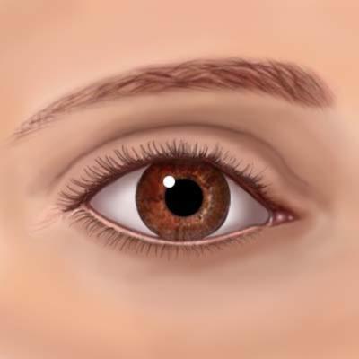 Susan Decker Medical Illustrator Dallas, TX