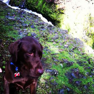bob+waterfall.JPG