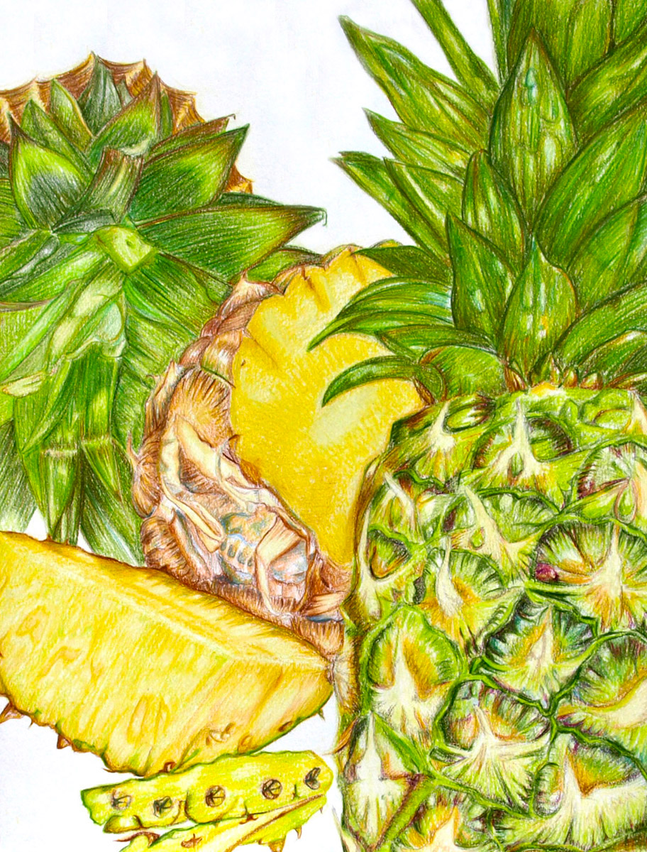 Pineapple Dissection