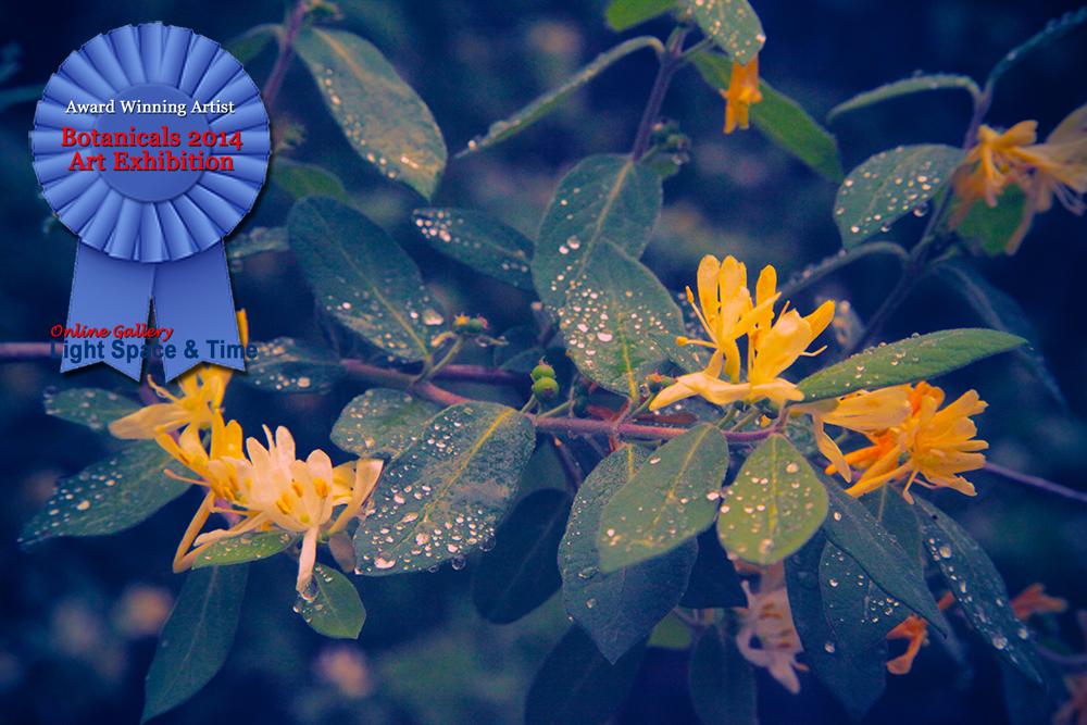 Matuson_1_Botanicals_SparklingDew_RibbonWinner.jpg