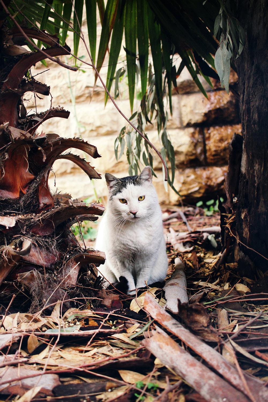 The Perfect Pet Photo, captured in Yemin Moshe, Old Jerusalem, Israel.