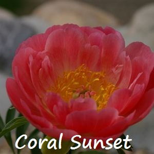 coral sunset.jpg