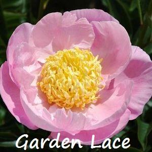 garden lace.jpg
