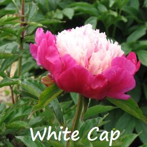 white cap 2.jpg