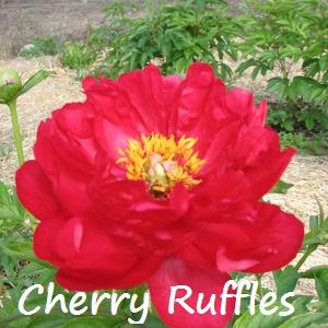 cherry ruffles.jpg