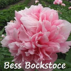 bess bockstoce.jpg