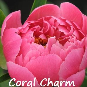 Coral charm.jpg