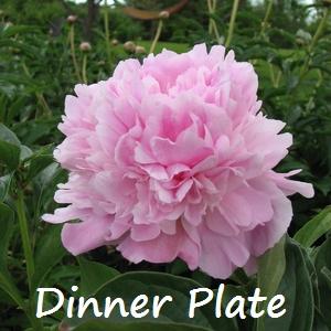 dinner plate 2.jpg