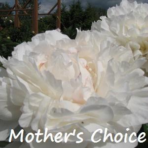 mothers choice.jpg