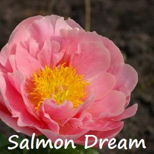 Salmon Dream.jpg