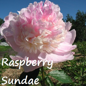 raspberry sundae.jpg