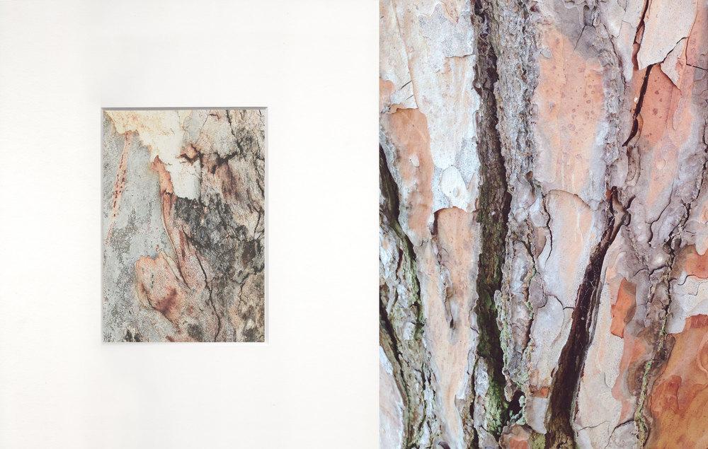 Trees I love by Naomi Yamada
