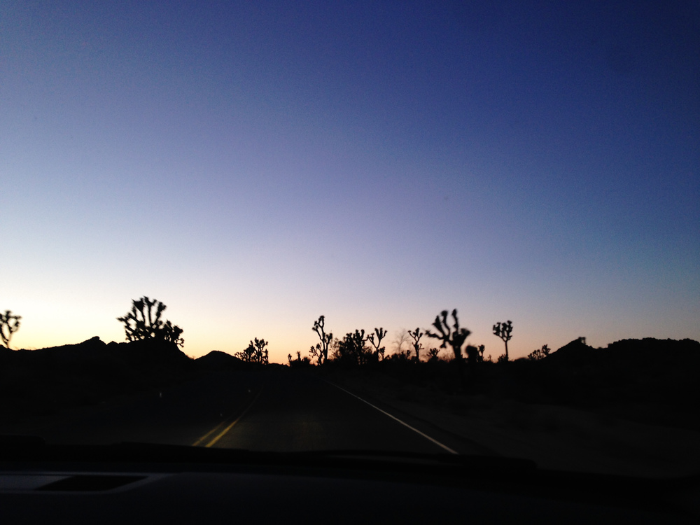 Joshua Tree at twilight
