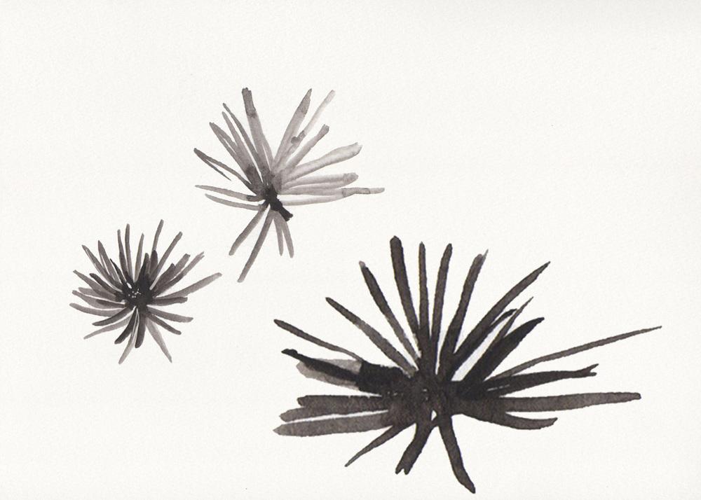 Naomi Yamada desert grass sketch