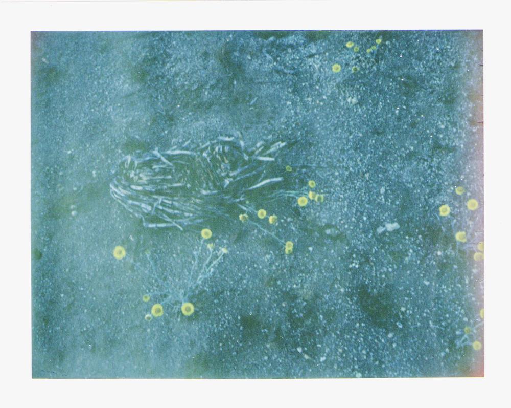 Joshua Tree Wildflowers by Naomi Yamada