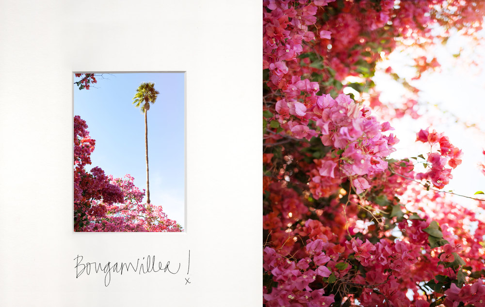 Palm-Springs-Desert-Bougainvillea-by-Naomi-Yamada.jpg