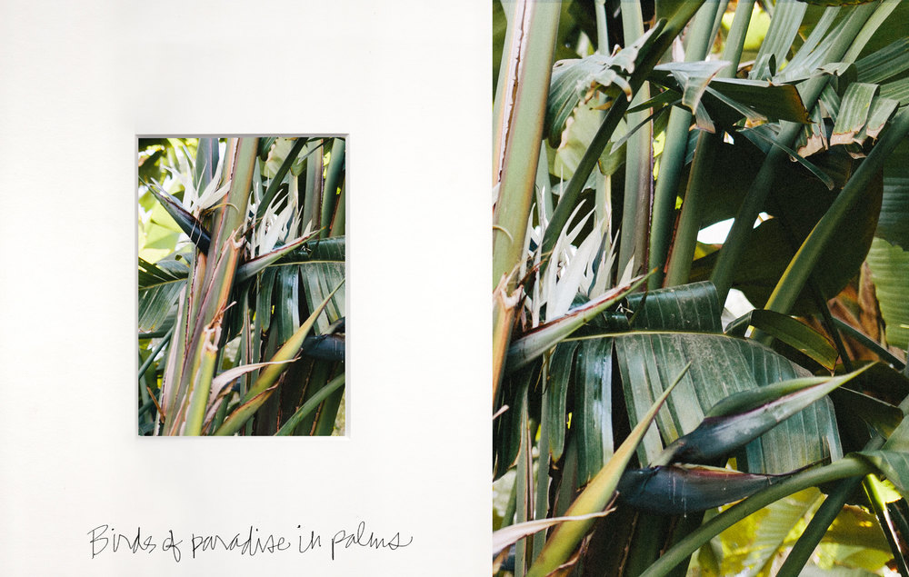 Bird of Paradise and Palm Leaves by Naomi Yamada