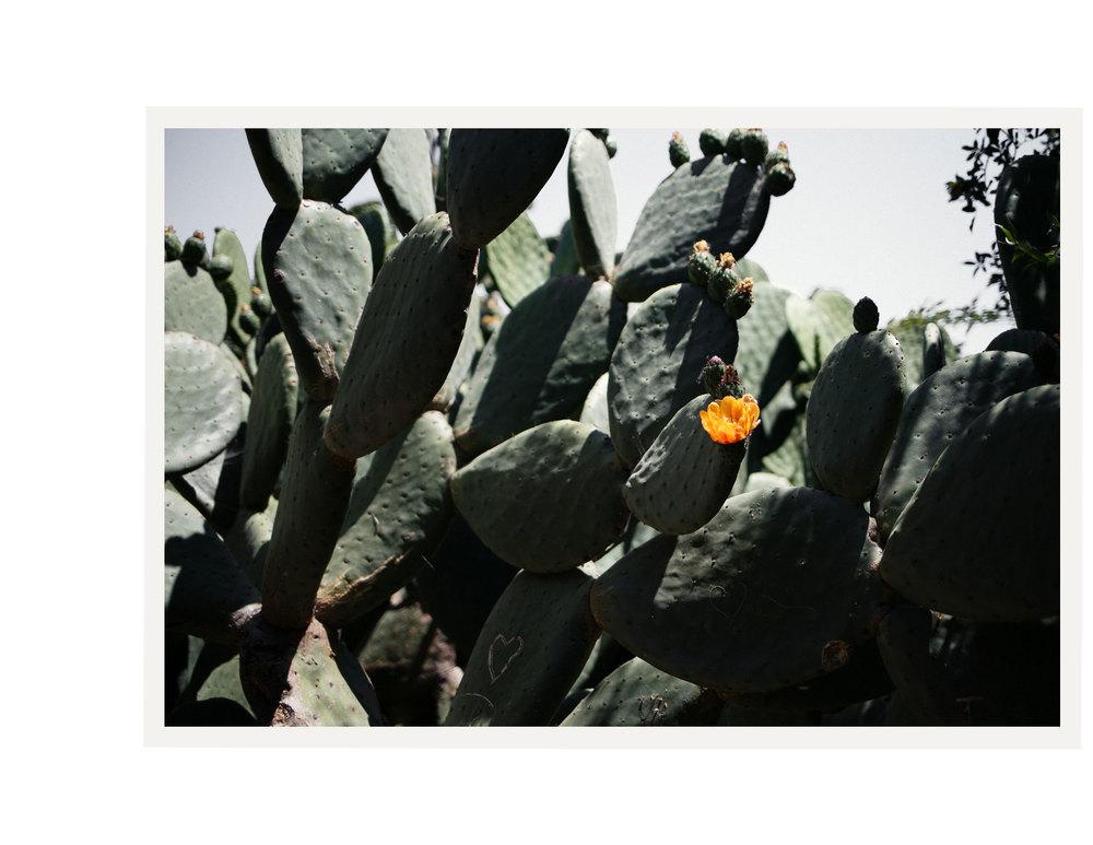 Big-Sur-Cactus.jpg
