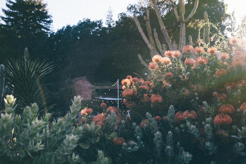 Big_Sur_Bakery_Garden_by_Naomi_Ya;mda-1.jpg