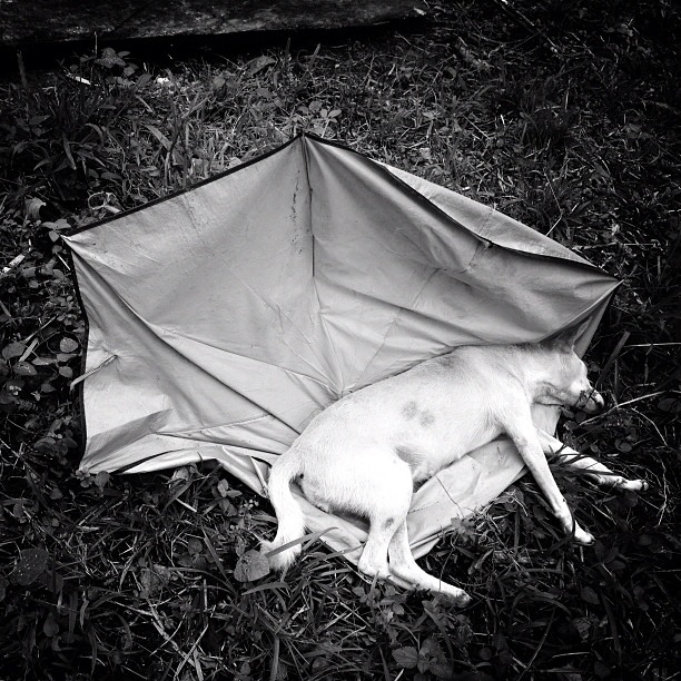 Dog dead tired (Taken with Instagram)