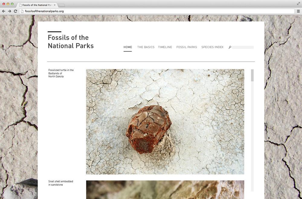 fossils_1.jpg