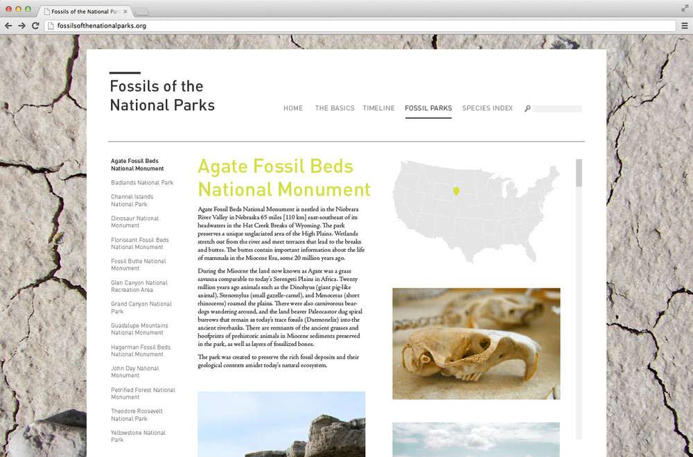 fossils_3.jpg